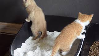 Kitten Goes Poop Standing Up !