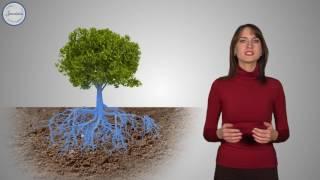 Биология 6 Продвижение воды по растению