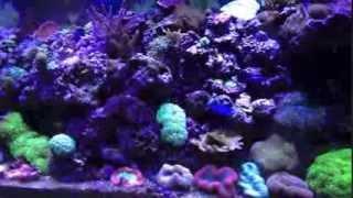 Reef Tank Setup (Essential Equipments)
