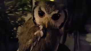Forest of Owl Cafe!! Akihabara, Tokyo, Japan
