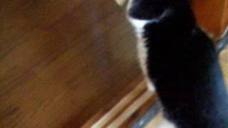ゴキブリになった猫 thumbnail