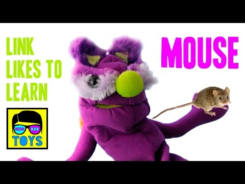 Learn About Animals For Kids - Mouse Facts For Children