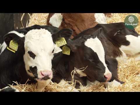 Wicklow Calf Company: Calf exports