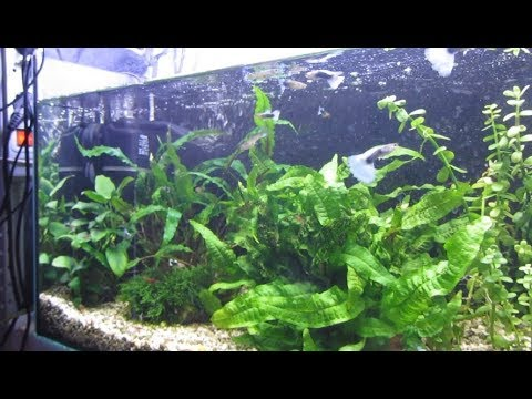 Как перезапустить аквариум
