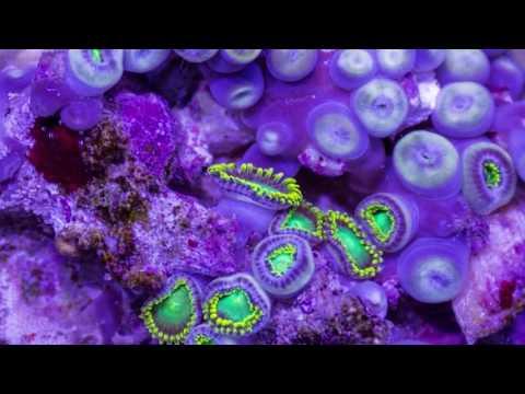 Beautiful Ocean Creatures Ultra HD