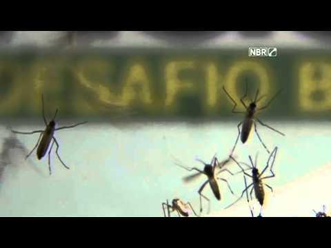 Século News - 04/02/16 - Reunião Montevideo sobre o Aedes aegypti