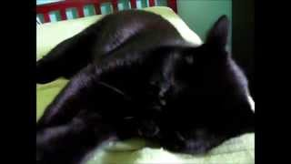 Crazed Cat After Mating