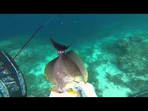 Spearfishing 2016 Raiatea