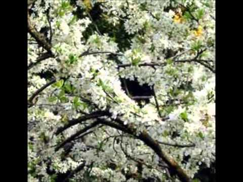 A Beautiful Music.. BLOSSOM by Shi Zhi-you for CHEN TaijiQuan !