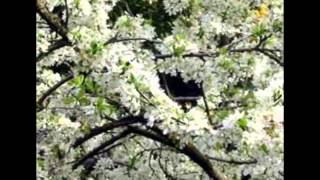 A Beautiful Music...PLUM BLOSSOM by Shi Zhi-you for CHEN TaijiQuan !