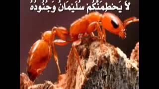 تلاوة لا توصف للشيخ أحمد العجمي سورة النمل  sheikh ahmed al ajmi surah annaml
