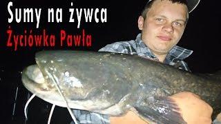 REKORDOWY SUM - Nocne zasiadki na sumy - łowienie sumów na żywca - wędkarstwo 2018