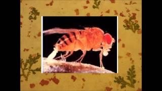 Desarrollo embrionario de Drosophila Melanogaster (genes involucrados)
