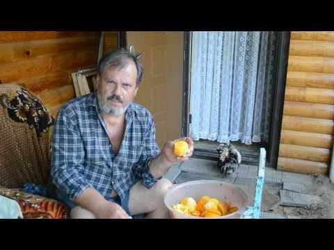 Фруктовая брага  Часть 10  Апельсины