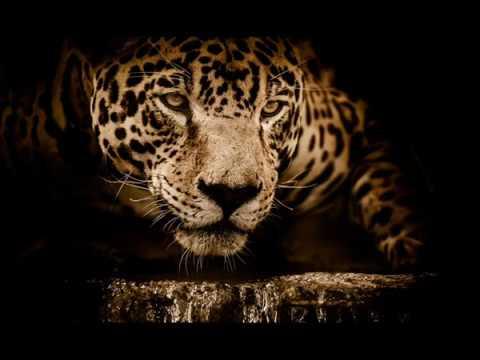 Quincas Moreira - Jaguar