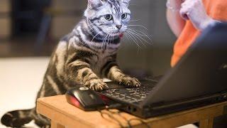 Лучшая игра для кошек - This is fanny cat.