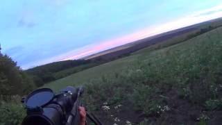 Результативная охота на косулю с манком