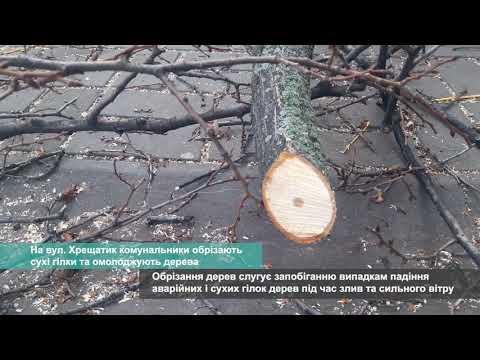 Телеканал АНТЕНА: На вул. Хрещатик комунальники обрізають сухі гілки та омолоджують дерева