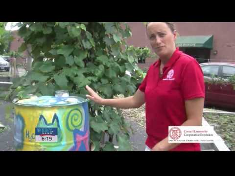 Cornell Cooperative Extension Connection   Conserving Water