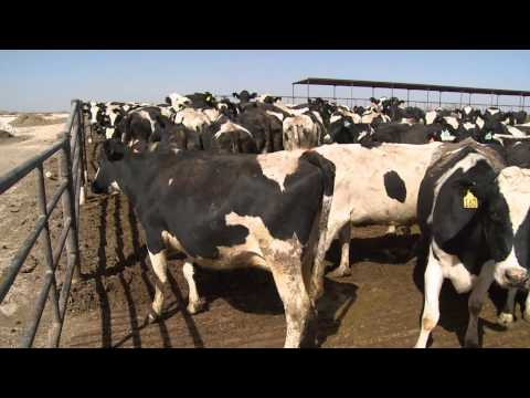 Dairy Assurance