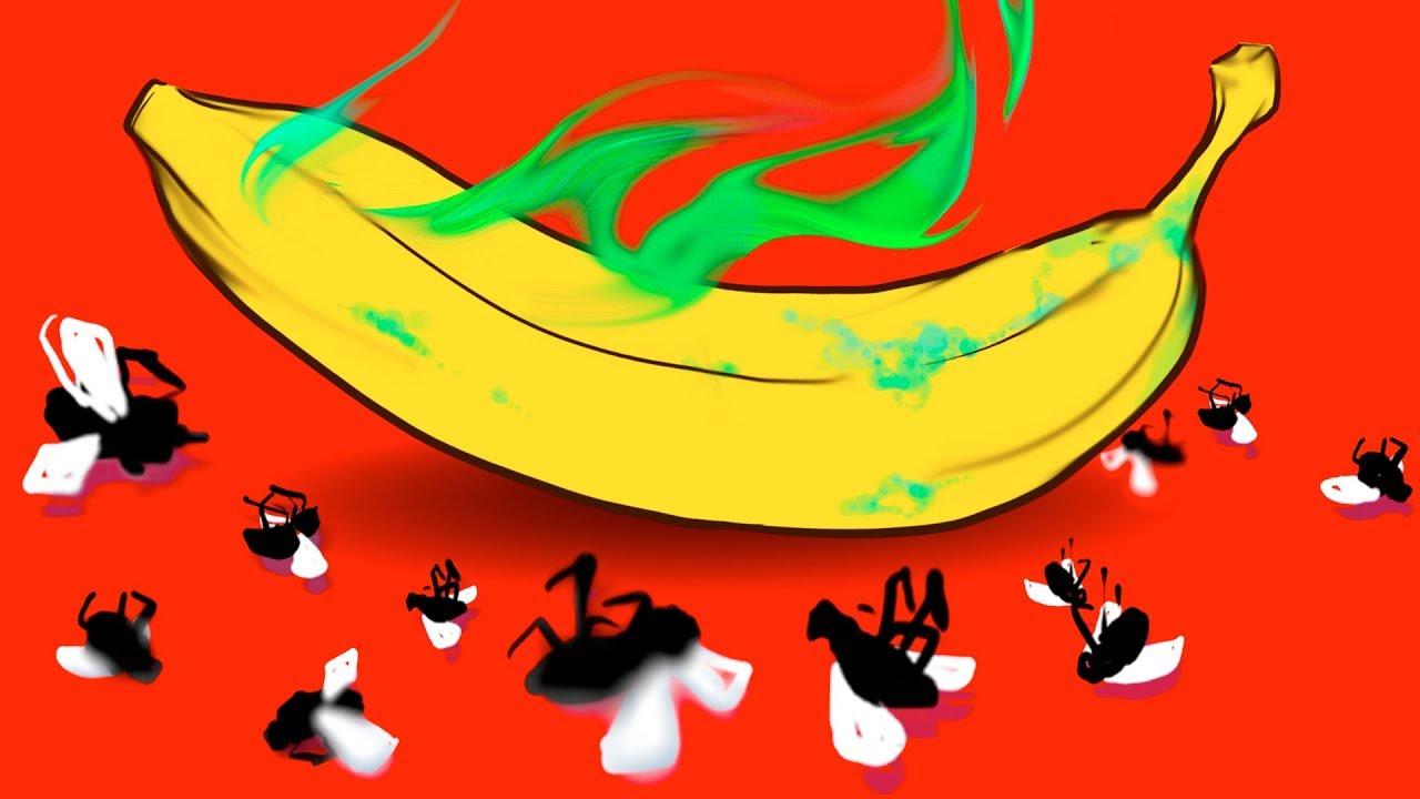 Comment Se Débarrasser Des Petite Mouche 4 façons naturelles de te débarrasser des mouches des fruits dans ta maison
