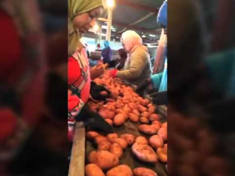 Potatoes from Portugalfruits Ltd. partner growers