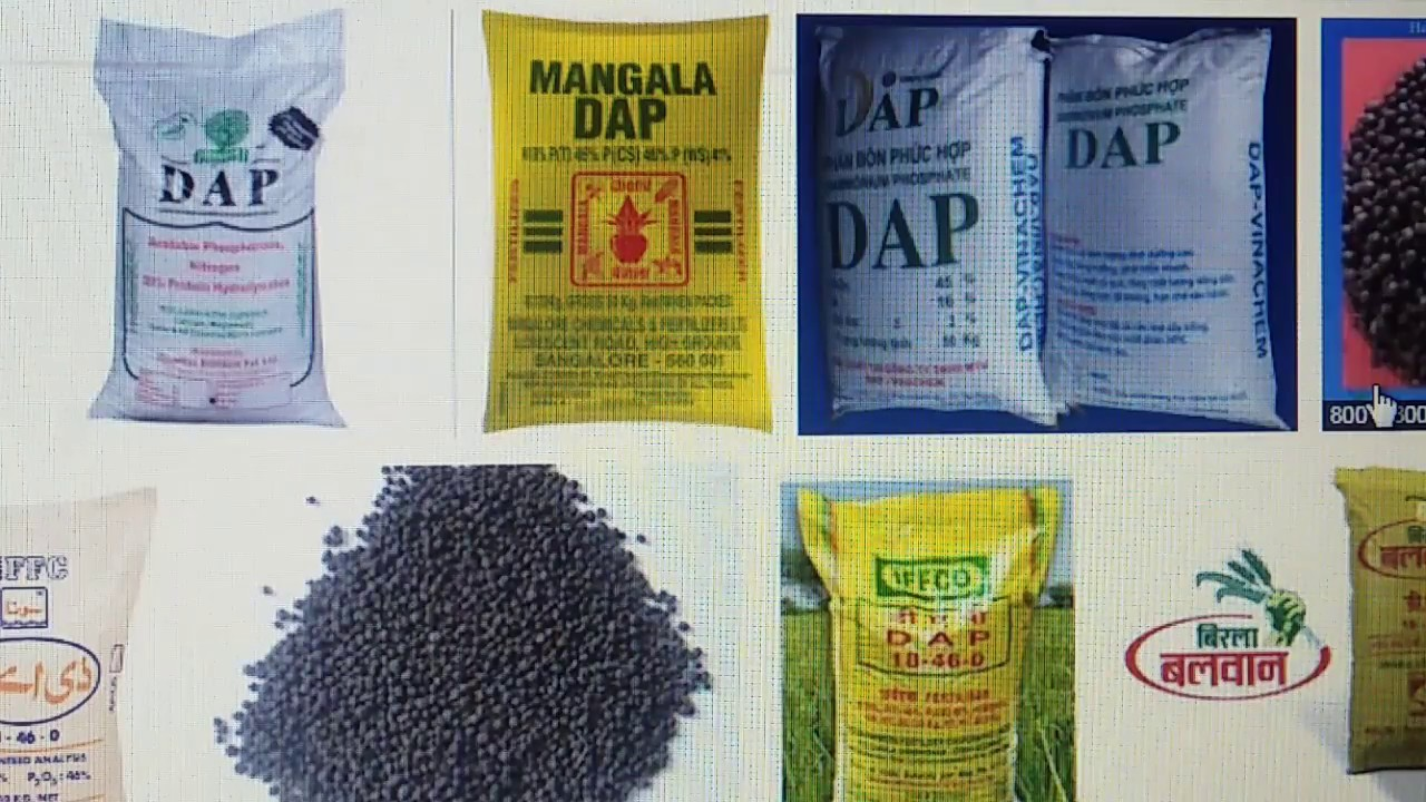 How to use Dap fertilizer in homeplants || DAP का फ़ायदा या नुसासन