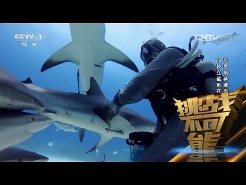 [挑战不可能(第一季)] 克里斯蒂娜挑战60秒立鲨鱼在掌心
