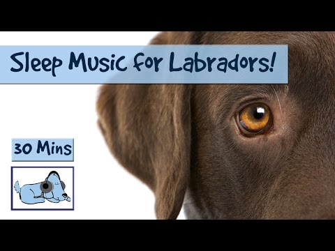 Relaxing Sleep Music for your Labrador! Relax your Lab! 🐶 #RETLAB02
