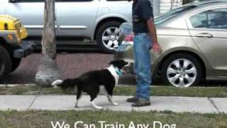 Dennis Dalia Dog Training Southwest K9 Academy Southwest Florida