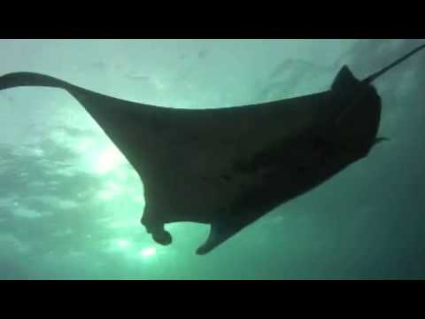 Aquanautics Dive: Manta Dreams