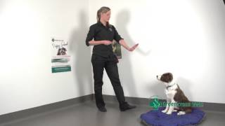 Teaching Your Puppy How To Stay