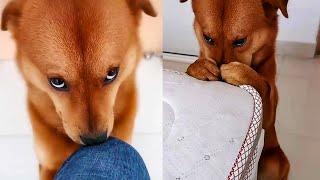 Собака каждый раз делает виноватое выражение мордочки и вот почему
