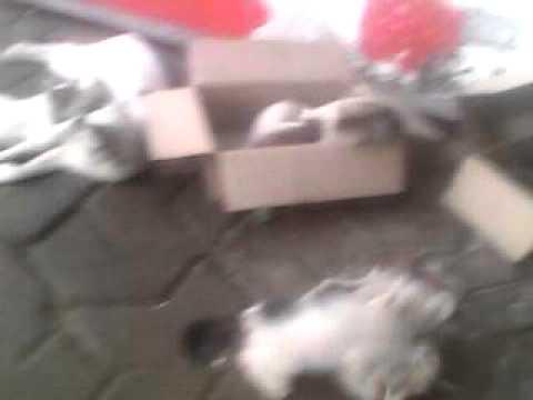 Rutwij Vaidya, Cat N Her New Born Sweet Kittens Shot Thru Mobile Near House