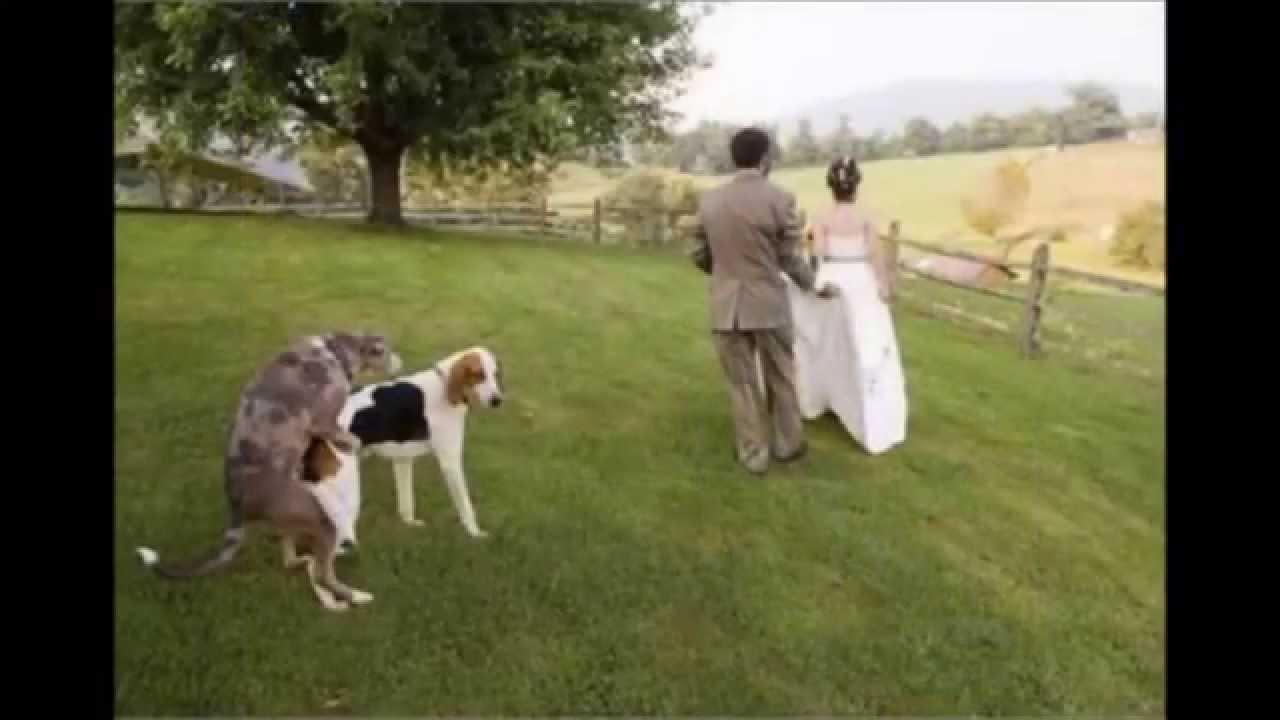 Dog Photobomb Pictures