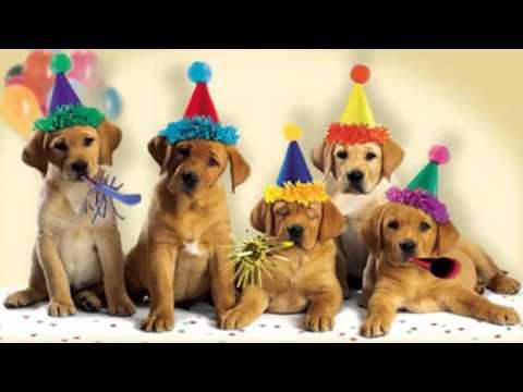 Cute Dogs Bark the -Happy Birthday- Song.mp4