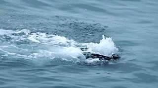 RJE Oceanbotics™ SRV-8 Underwater ROV