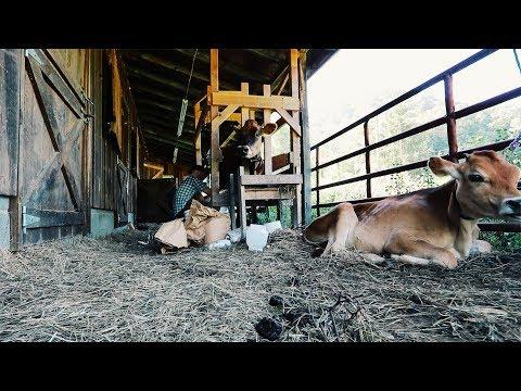 Small Farm LIFE in 8:49