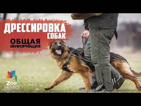 Дрессировка и воспитание собак | Общая информация о дрессировке | Как правильно дрессировать собаку