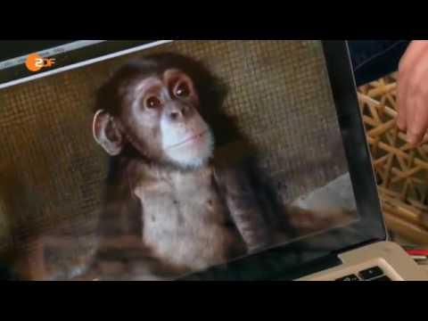 Ausverkauf von Menschen-Affen