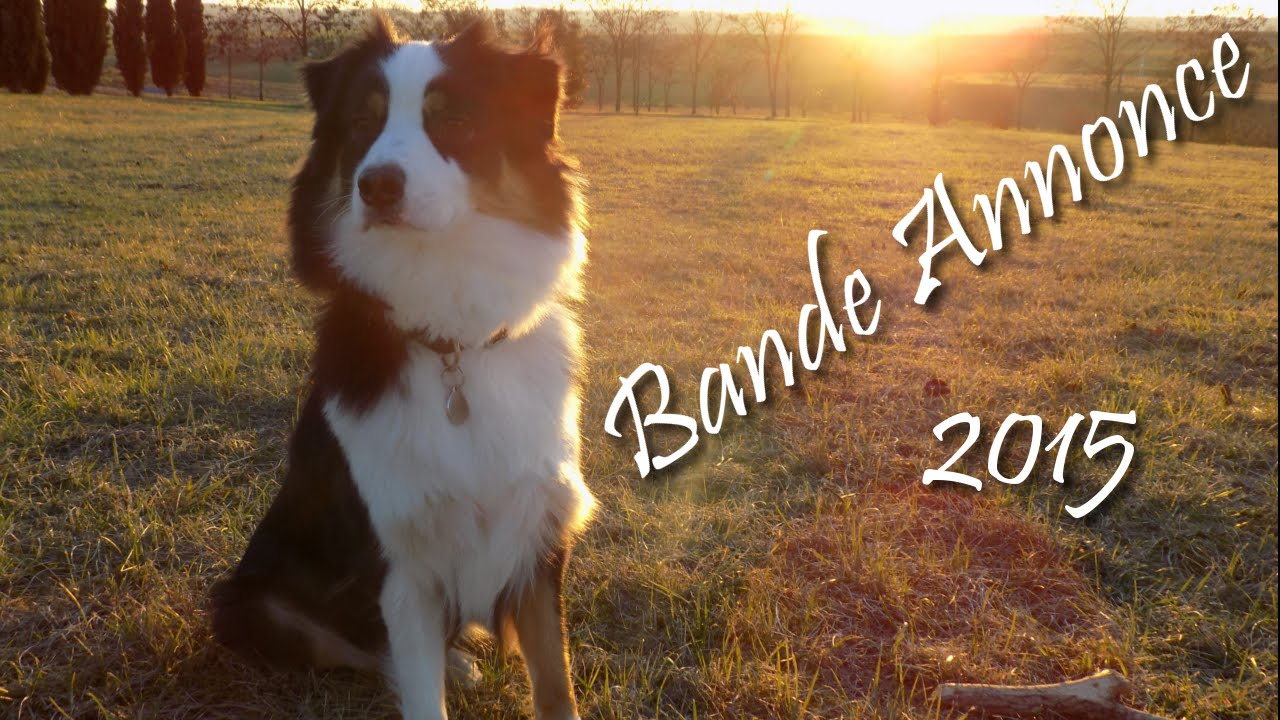 bande annonce 2015 youtube