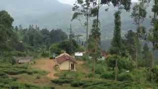 Tea factory and plantation in Nuwara Eliya