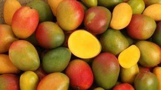 An amazing mango farm in South Florida