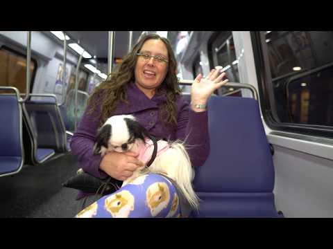 Small service dog DC Metro boarding