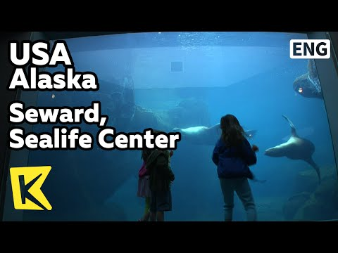 【K】USA Travel-Alaska[미국 여행-알래스카]수어드, 알래스카 해양센터/Seward/Sealife Center/Sea Creatures/Aquarium
