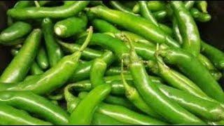10 فوائد الفلفل الأخضر الحار تجعلك لن تتوقع عن تناوله باستمرار !