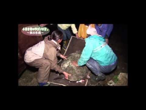 NO2 「ウミガメを守る」 小林夫婦の記録