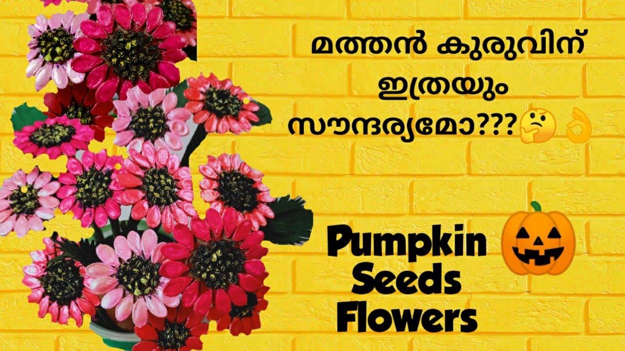 സുന്ദരി മത്തൻ കുരു..../Pumpkin Seeds Flower Bouquet/Amazon Review/Seeds Craft