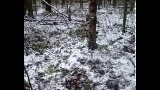 Охота на зайца 12