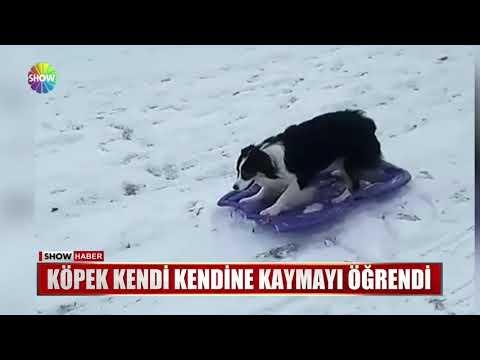 Köpek Kendi Kendine Kaymayı öğrendi